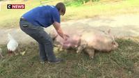 Un refuge pour les animaux de la ferme