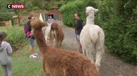 Se balader avec des Lamas à une heure de la capitale