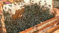 Lituanie : la «Bee-therapy» fait sensation