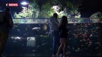 L'aquarium de Paris s'essaie à l'aquaponie