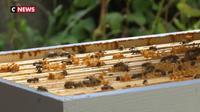 Aisne : des ruches installées chez des particuliers pour lutter contre la disparition des abeilles