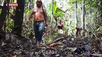Amazonie : les tribus amérindiennes premières victimes de la déforestation