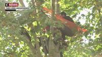 Un homme perché dans un arbre à Paris pour sauver des arbres dans le Gers