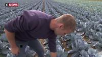 Retour de la pluie : le soulagement des agriculteurs