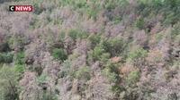 Sécheresse : la forêt de Fontainebleau décimé