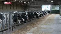 Incendie de Lubrizol : reprise de la collecte de lait après la levée des mesures de restrictions