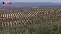 Les taxes américaines menacent les producteurs espagnols d'huile d'olive