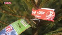 Hautes-Alpes : les sapins de Noël Label Rouge arrivent pour les fêtes