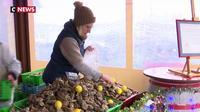 Les huîtres : incontournables sur les tables du réveillon