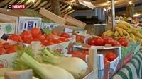 Les tomates bio ne pourront plus pousser sous serre