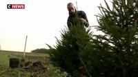 Dans le Nord, une initiative écologique pour faire revivre les sapins