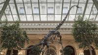 Skinny a vécu il y a 150 millions d'euros et est un cousin du diplodocus