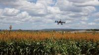 Dans les cinq prochaines années, l'agriculture se placera à la deuxième place des utilisateurs de drones dans le monde.