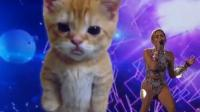 Miley Cyrus et son chat géant