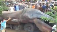 Une créature géante et inconnue découverte au Vietnam