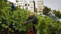 C'est 84e édition de cet événement culture dédié aux vignes de la butte de Montmartre.