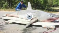 Le pêcheur voulait relâcher sa prise mais elle était trop blessée pour nager