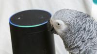 Un perroquet africain, surnommé Rocco, a noué une relation inattendue avec une enceinte connectée d'Amazon, au doux nom d'Alexa.