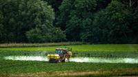 Paris, Lille, Nantes, Grenoble et Clermont-Ferrand ont annoncé jeudi l'interdiction de l'utilisation des pesticides sur leurs territoires.