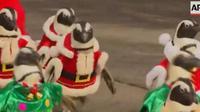 Les pingouins du parc d'attractions Everland de Séoul (Corée du Sud) , défilent déguisés en Pères Noël