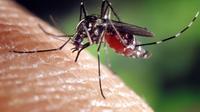 Le moustique tigre est actif dan 51 départements français