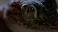 Cette série documentaire, réservée à un public averti, révèle les terreurs qui règnent dans le monde animal à la tombée de la nuit.
