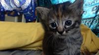Ce petit chaton a l'air constamment déprimé