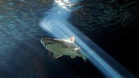 Deux plaisanciers ont pu fimer un requin au large des côtes de Saint-Tropez au début du mois d'août.