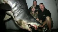 Ce spécimen de requin mako est peu-être le plus gros jamais pêché