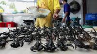 Un Chinois assure avoir mangé plus de 10 000 scorpions ces 30 dernières années et en serait même devenu dépendant.