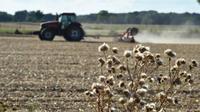 Le pays souffre depuis plusieurs semaines d'un épisode de sécheresse inédit, au grand dam des agriculteurs.