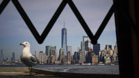 La skyline de New York, obstacle mortel pour les oiseaux.