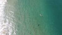 Alors qu'un grand squale s'approchait, le pilote a utilisé le haut-parleur de son drone pour prévenir le surfeur du danger imminent.