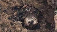 Il a fallu creuser plus de deux heures pour retrouver Ralph.