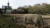 Un rhinocéros se balade dans le zoo de Buenos Aires, le 24 juin 2016.