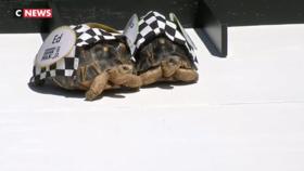 États-Unis : une course de tortues à Indianapolis