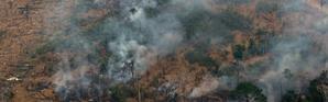 Des volutes de fumée s'échappent d'arbres de la forêt amazonienne, le 24 août 2019 près de Boca do Acre, dans l'ouest du Brésil [LULA SAMPAIO / AFP]