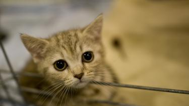 L'interdiction est motivée par le «sevrage trop précoce des chiots et des chats» vendus dans ces lieux.