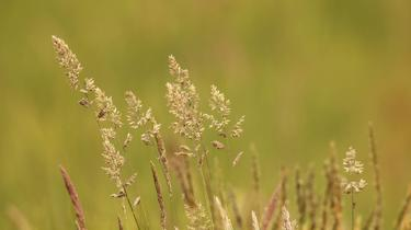 Sante Allergie aux pollens : la France en alerte maximale
