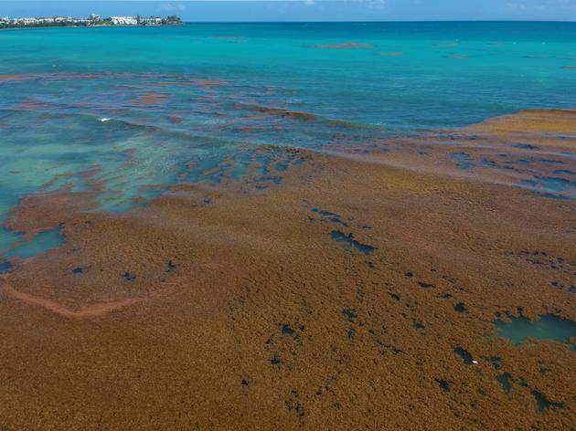 Des algues sargasses au large de la ville du Gosier, le 23 avril 2018 en Guadeloupe [Helene VALENZUELA / AFP/Archives]