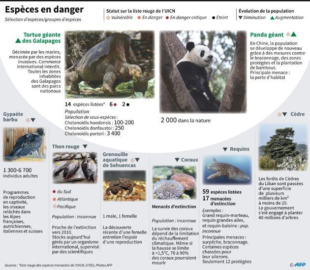 Espèces en danger [Gal ROMA / AFP]