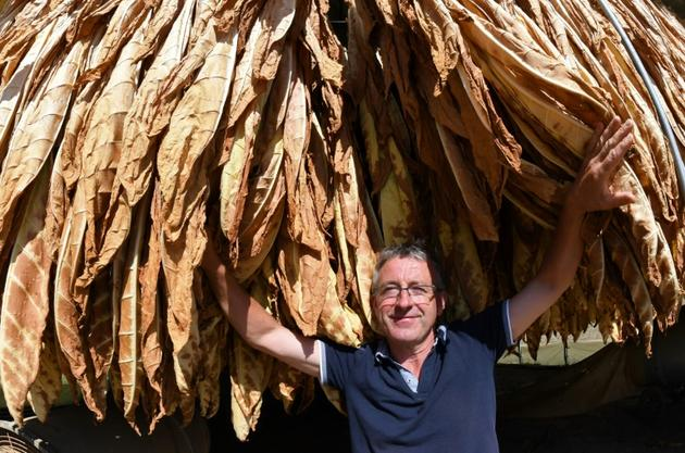 Le producteur de tabac Patrick Maury devant sa récolte, à Mazeyrolles, le 20 septembre 2019 [Mehdi FEDOUACH / AFP/Archives]