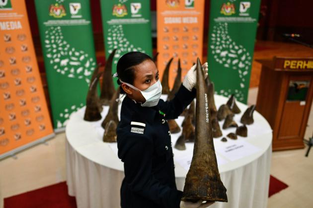 Saisie à Kuala Lumpur le 20 août 2018 de cornes de rhinocéros qui devaient être expédiés vers le Vietnam. [Manan VATSYAYANA / AFP/Archives]
