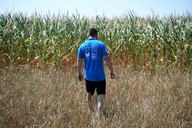 Un agriculteur dans son champ le 6 août à Mitschdorf, dans l'est de la France [PATRICK HERTZOG / AFP/Archives]