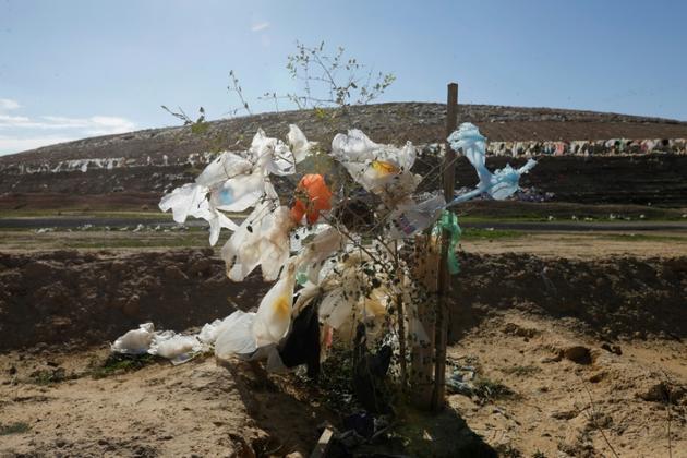 Des sacs en plastique accrochés à un arbre dans le désert du Neguev, en Israël, près de la localité de Rahat, le 19 janvier 2019 [MENAHEM KAHANA / AFP]