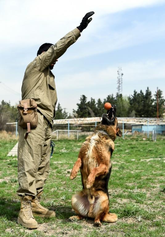 Un chien à Kaboul entraîné à réceptionner une balle le 7 avril 2019 [WAKIL KOHSAR / AFP]