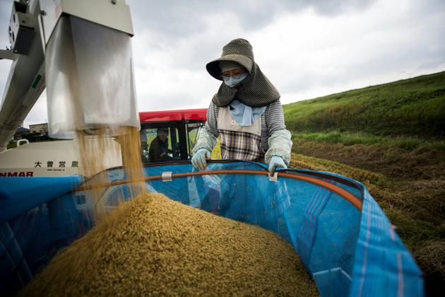 La Japonaise Toshiko Ogura s'occupe de la récolte de riz sur ses terres à Kazo, au Japon, le 31 août 2018 [Behrouz MEHRI / AFP]