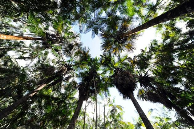 Forêt d'Acai au Brésil [EVARISTO SA / AFP/Archives]
