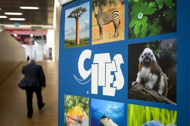 Panneau annonçant la Conférence mondiale sur la vie sauvage, qui doit renforcer la Convention sur le commerce international des espèces de faune et de flore sauvages menacées d'extinction (CITES), le 17 août 2019 à Genève (Suisse).<br />  [FABRICE COFFRINI / AFP]