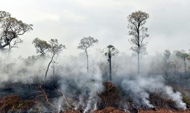 Des feux de forêt dans le parc national Otuquis, le 26 août 2019 en Bolivie [Aizar RALDES / AFP]